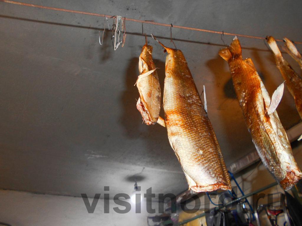 Рыба в гараже Эгвекинот