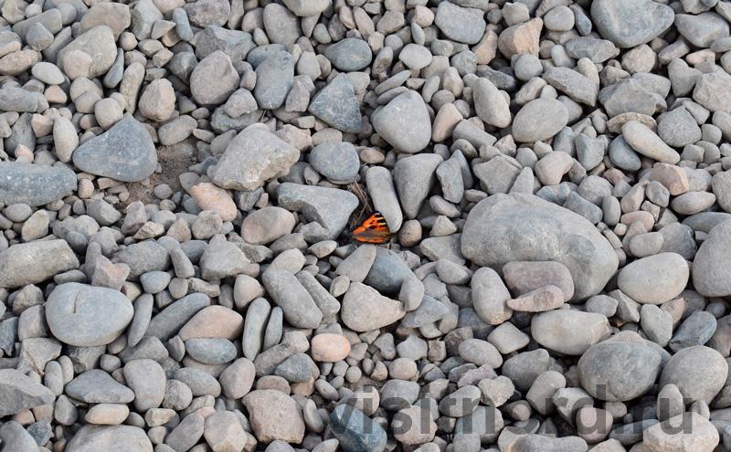 Чукотская бабочка