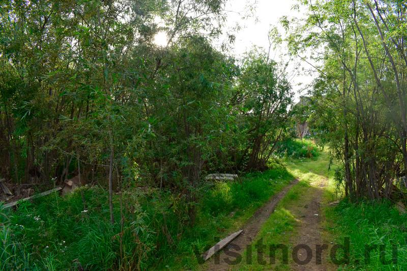 Лес в Марково