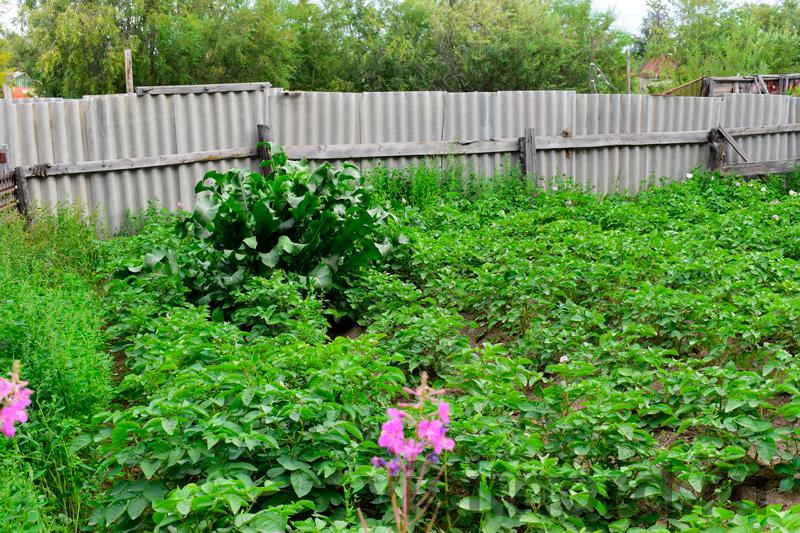 Огород в Марково
