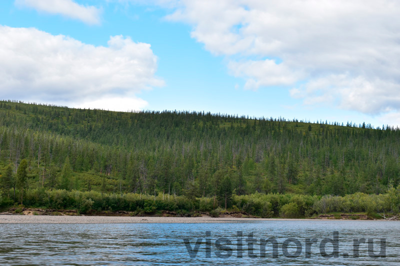Лес на реке Анадырь