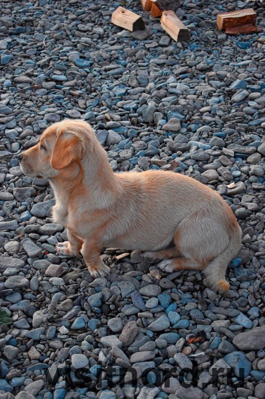 Собака рыбалка