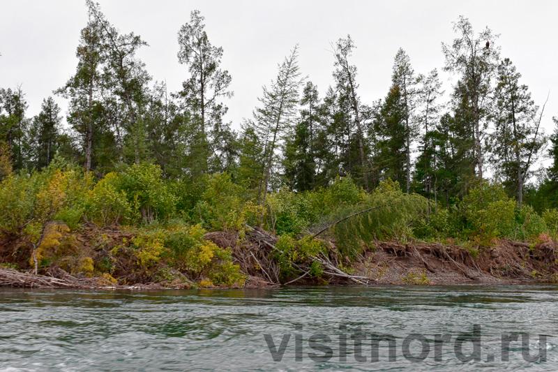 Деревья в верховьях реки Анадырь