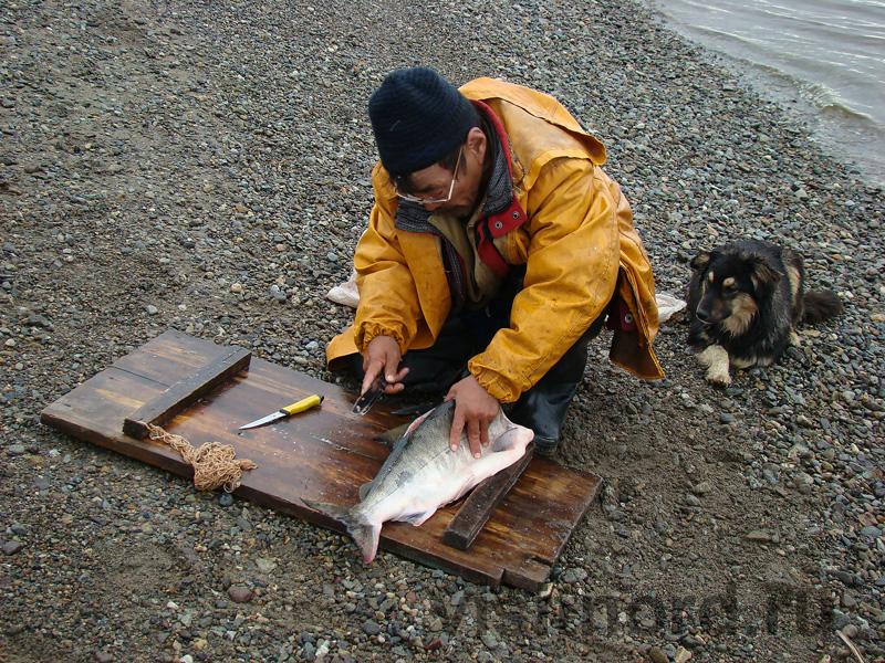 Разделка рыбы на две половины