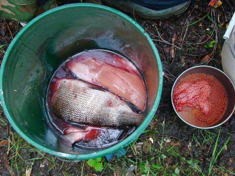 Рыбалка и икра Канчалан