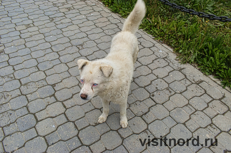 Собака в Анадыре