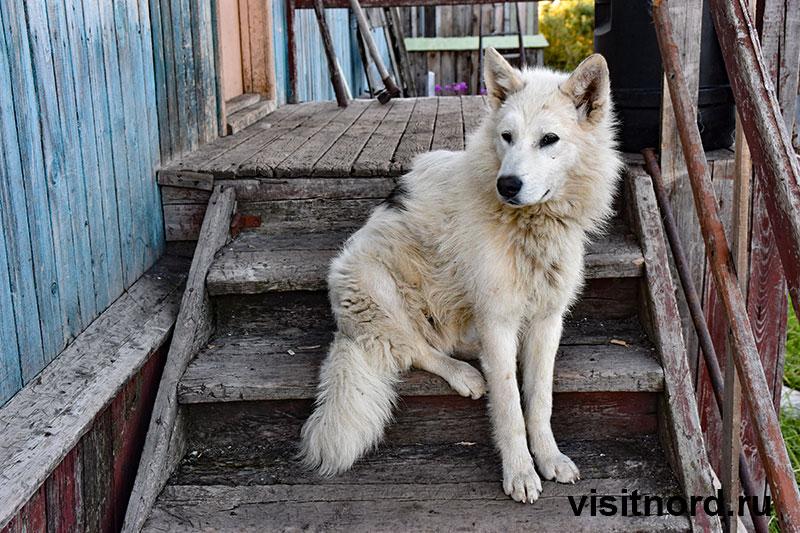 Собака в Краснено